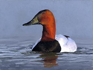 duck stamp art winner